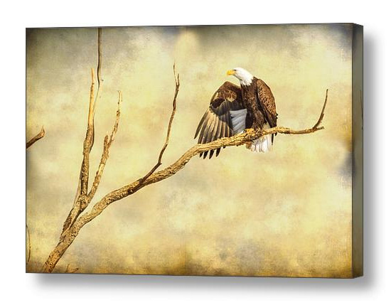 Majestic Eagle Point Canvas Print