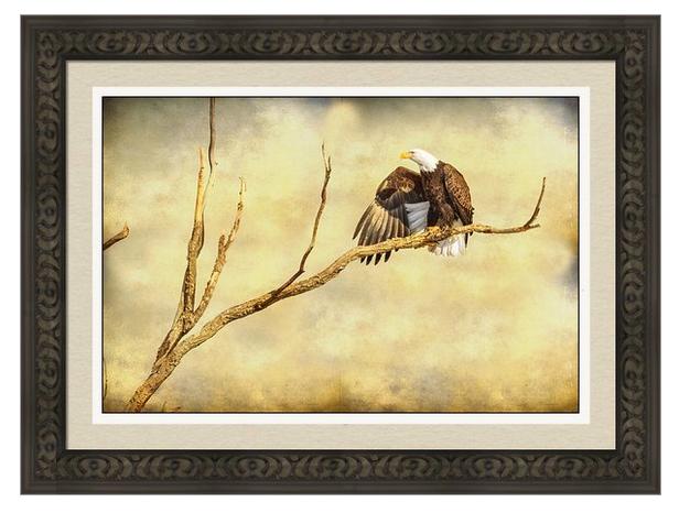 Majestic Eagle Point Framed Print