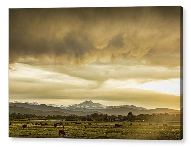 Colorado Grazing Acrylic Print